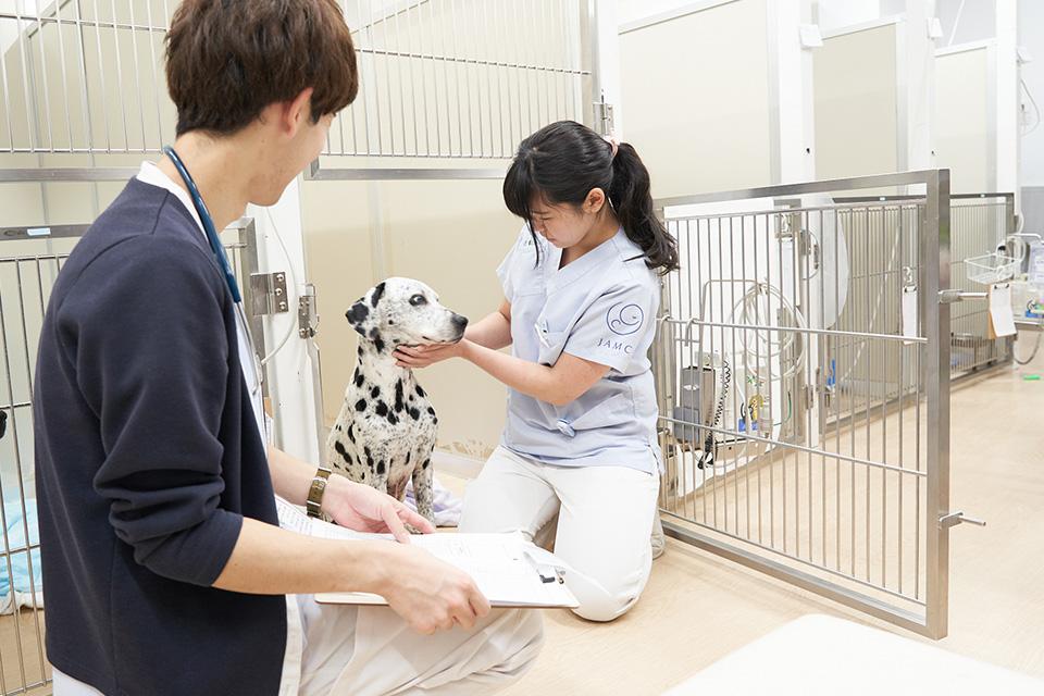 入院している動物の見守り問題