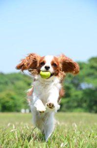 犬のおもちゃ選びで大切な3つのこと
