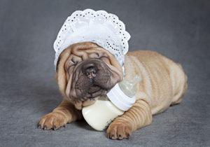 犬の哺乳期・犬の離乳期