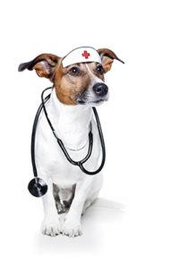 愛犬の血液型知ってますか?