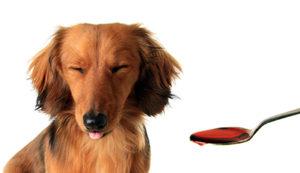 犬の薬の飲ませ方 コツをお教えいたします