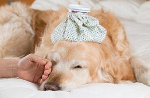 犬の緊急疾患:当院で多い病気10選