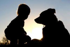 はじめて犬を飼おうとしている方に考えてほしい5つのこと