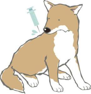 これだけはやっておきたい犬に必要な予防5選