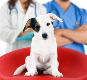犬の健康診断・大切な4つのポイントとは?