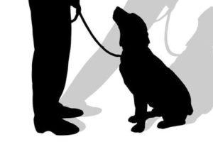 犬の防災対策 事前に出来る6つの準備