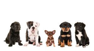 子犬をご自宅へ ―知っておきたい3つの準備―