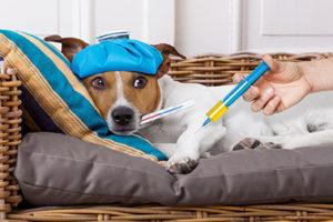 犬の熱中症 知っておきたいこと