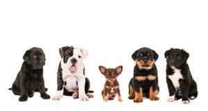 犬の性格比較!これから犬を飼いたい人に