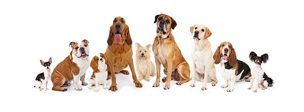 犬と他のペットの相性チェック