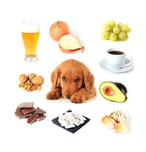 犬の中毒 当院で多い6つの誤飲