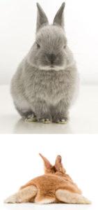 うさぎの可愛い写真を撮る方法