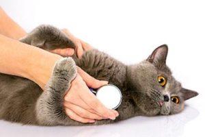猫の呼吸が速い!考えられる病気と対処法