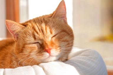 猫の慢性腎臓病