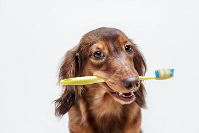 もう臭わせない!犬の口臭原因と対策5選
